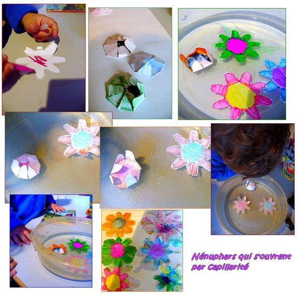 Experience La Fleur Qui S Ouvre Sur L Eau Centerblog